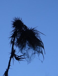 silhouette of seed pod